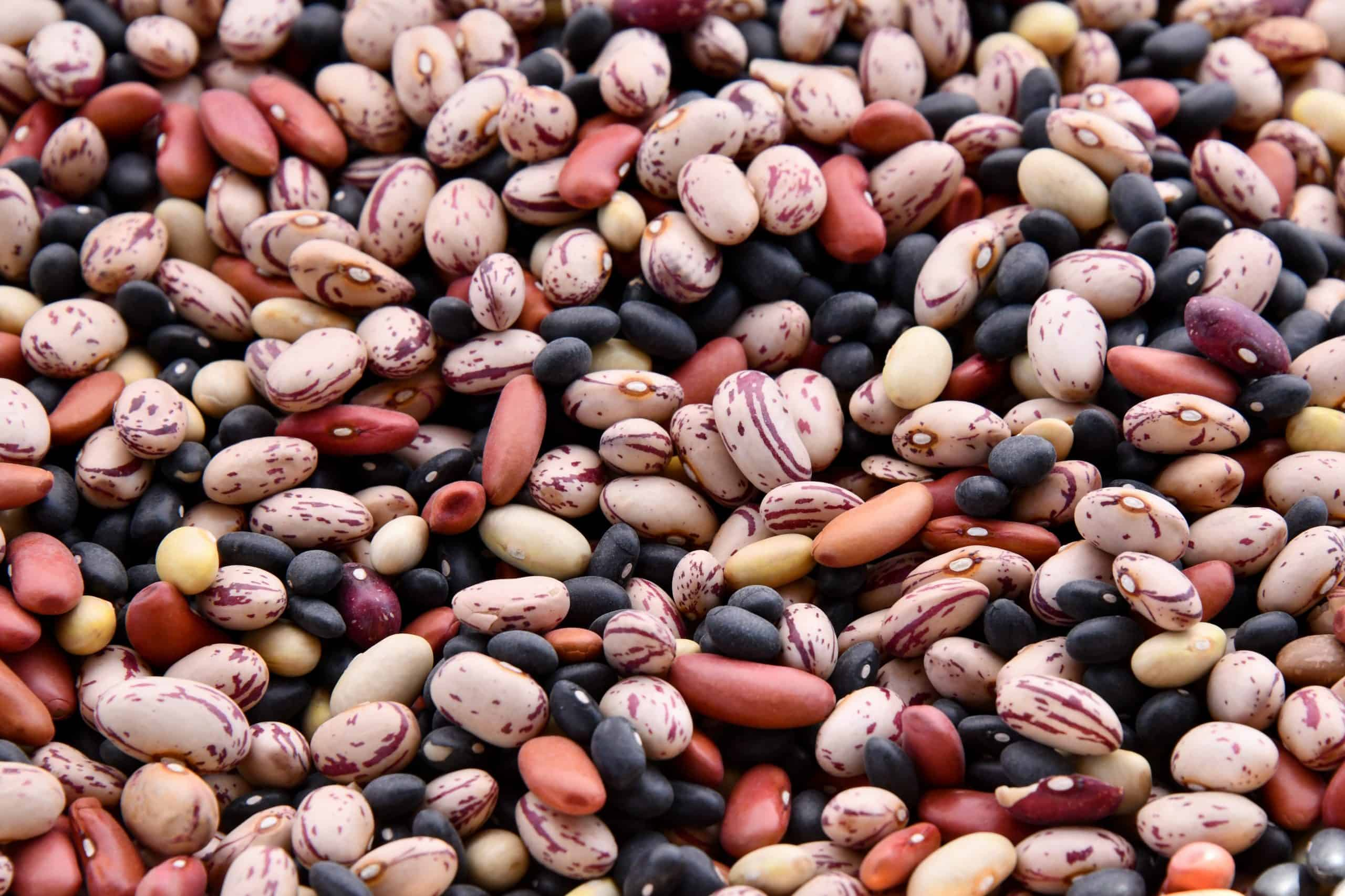 Legumes as protein source